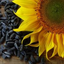 Купить семечки подсолнуха оптом: выгодно или нет?